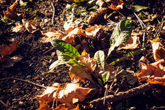 Autumnal colors on the ground in forest Royalty Free Stock Image