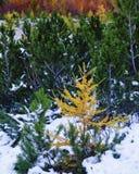 Autumnal colors Stock Photo