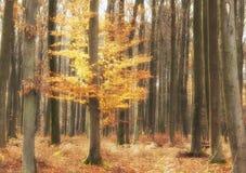 Autumnal colors Stock Photos