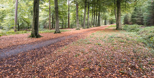 Autumnal colors in the wood Stock Images