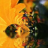 Autumnal coloured leaves with reflections Royalty Free Stock Photos