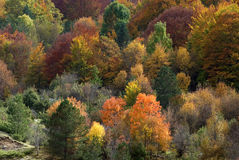Autumnal colours Royalty Free Stock Photos