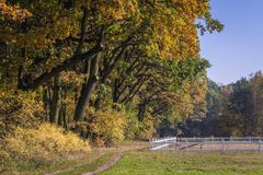 Kampinos Forest in Poland. Autumnal colours in area of Kampinos Forest near Warsaw, Poland Royalty Free Stock Photo