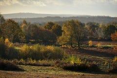Autumnal colours Stock Photos