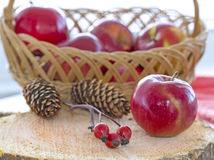 Autumnal composition with brier berry branch Stock Photography