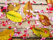 Autumnal composition of colorful flowers and yellow. Leaves Stock Images