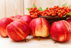 Autumnal composition from fruits.apples and rowan.wooden backgro. Und Royalty Free Stock Photo