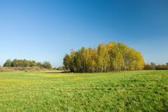 Autumnal copse and green meadow. Autumnal copse, big green meadow and clear blue sky in sunny day royalty free stock photos