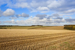 Autumnal copse and straw stubble Stock Image