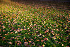 Autumnal covered grassland Stock Images