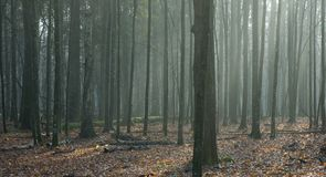 Autumnal deciduous stand landscape Stock Images