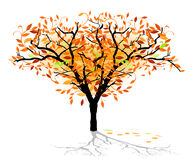 Autumnal deciduous tree Stock Images