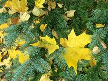Autumnal decoration Royalty Free Stock Images