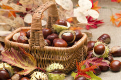 Autumnal decoration Royalty Free Stock Photography