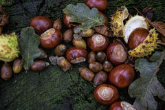 Autumnal decoration - acorns, chestnuts, buckeye, oak leaves on a wooden table. Stock Images