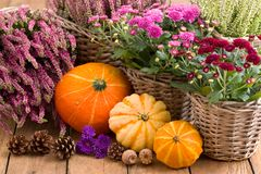 Autumnal decoration with flowers and pumpkins Royalty Free Stock Images