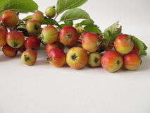 Autumnal decoration with crab apples Stock Images