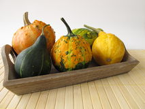 Autumnal decoration with ornamental gourds Royalty Free Stock Photography
