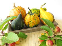 Autumnal decoration with ornamental gourds Royalty Free Stock Images