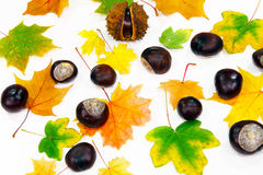 Autumnal decoration scattered Stock Images