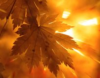 Autumnal design Royalty Free Stock Image
