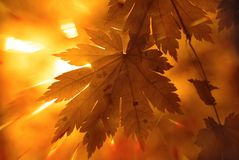 Autumnal design stock photography