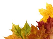 Autumnal design element Royalty Free Stock Photography