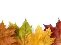 Autumnal design element Royalty Free Stock Image