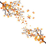 Autumnal design. Illustration of a branch with colorful leaves Royalty Free Stock Images