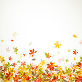 Autumnal design Royalty Free Stock Photo