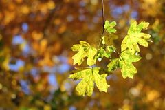 Autumnal details - colorful leaves and bokeh Stock Photography