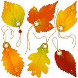 Autumnal discount. Vector fall leaves Royalty Free Stock Image