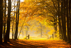 Autumnal Dreams Stock Images
