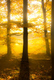 Autumnal Dreams Royalty Free Stock Photography