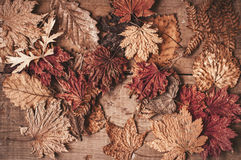 Autumnal dry maple and oak leaves Stock Photo