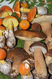 Autumnal edible mushrooms Royalty Free Stock Photography