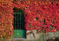 Autumnal entrance Stock Images