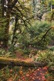 Autumnal Equinox Stock Photos