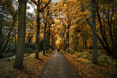 Autumnal evening light Royalty Free Stock Images