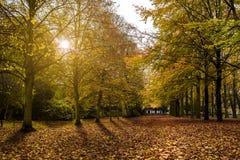 Autumnal evening sun light Stock Photography