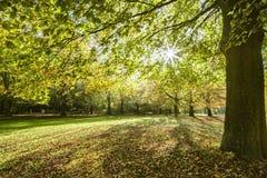 Autumnal evening sun light Royalty Free Stock Photos