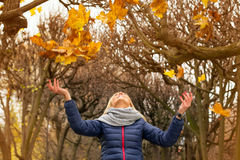 Autumnal expression in the park Stock Images