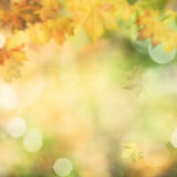 Autumnal fall. Abstract environmental backgrounds stock photography
