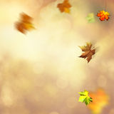 Autumnal fall. Abstract seasonal backgrounds stock images