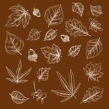 Autumnal fallen leaves and acorns chalk sketches Stock Photos