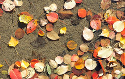 Autumnal fallen leaves Stock Photos