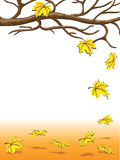 Autumnal falling of the leaves Royalty Free Stock Photos
