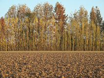 Autumnal field Royalty Free Stock Images