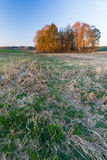 Autumnal field landscape with fallen leaves Royalty Free Stock Photos