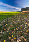Autumnal field landscape with fallen leaves Stock Images